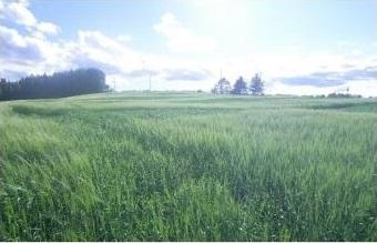 Visite de parcelles agricoles