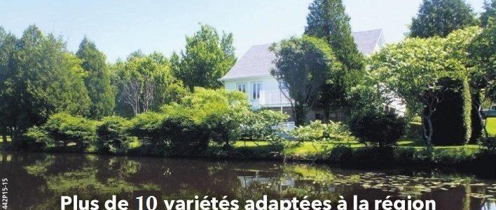 Arbustes et arbres pour riverains: c'est le temps de commander!