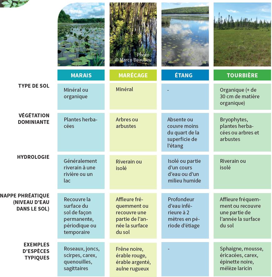 $ principaux types de milieux humides: Marais, marécage, tourbière, étang. Comment reconnaître ces milieux humides