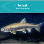 Consulter la fiche Touladi